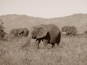 Reise nach Kenya