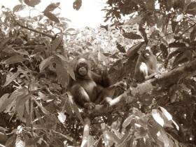 Reise durch Borneo
